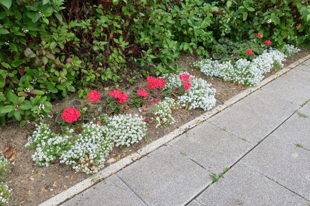 Summer Flower Planting - 12